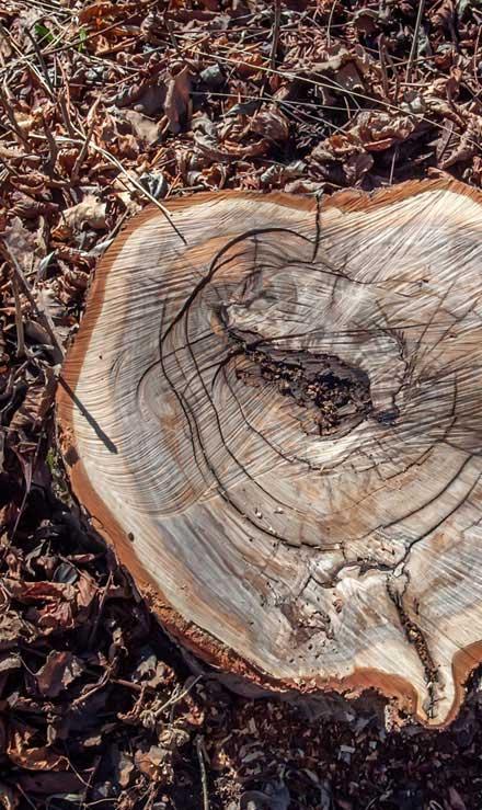 Lone Oak Lawns LLC Tree Removal